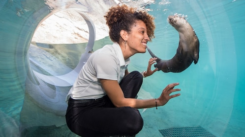 Woman watching otter in underwater walkway at Zoo Miami