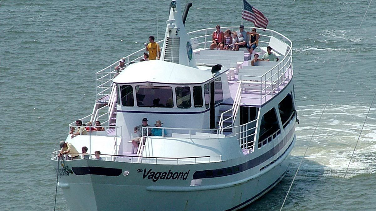 Guided Dolphin Cruise from Hilton Head