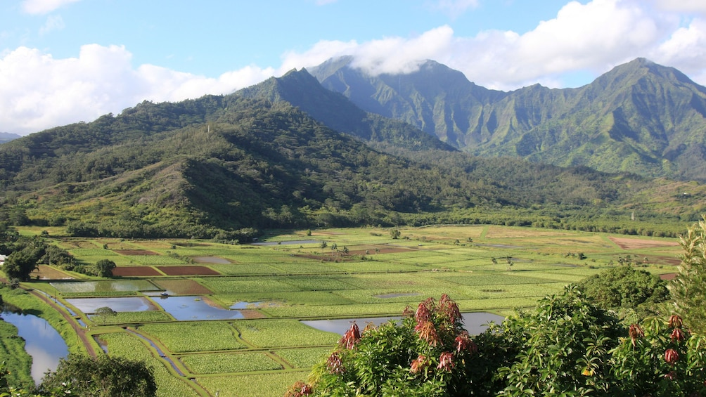 Show item 8 of 8. green valley and lush mountains in Kauai