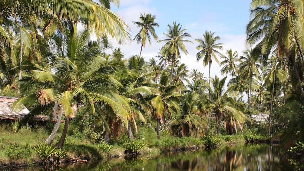 Show item 3 of 8. river lined with palm trees in Kauai