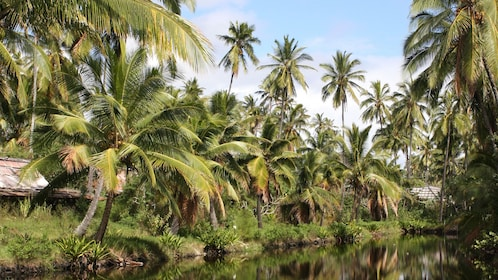 river lined with palm trees in Kauai