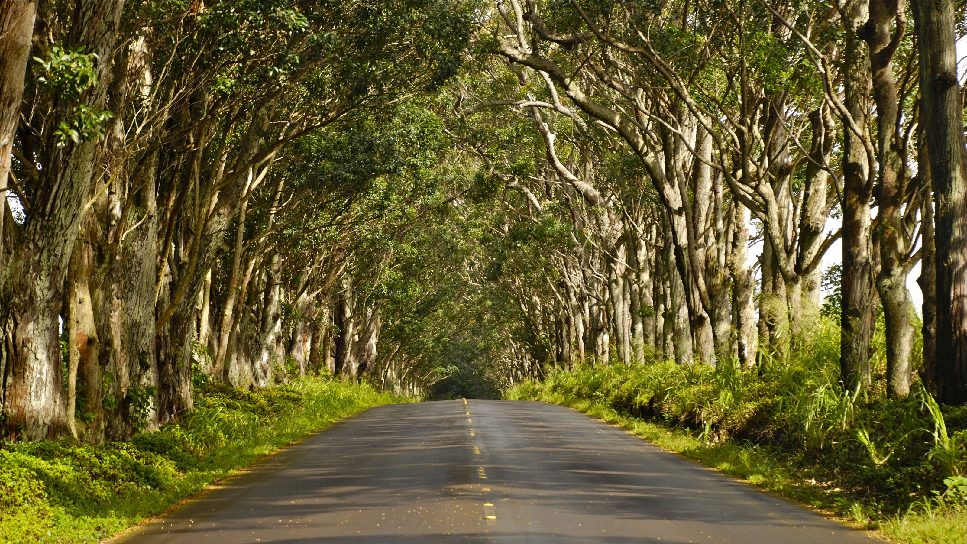 tree lined road in Waimea Canyon in Kauai