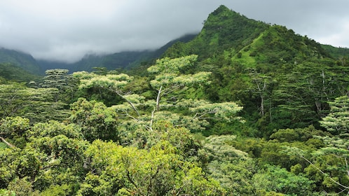 tropical forests in Kauai mountains