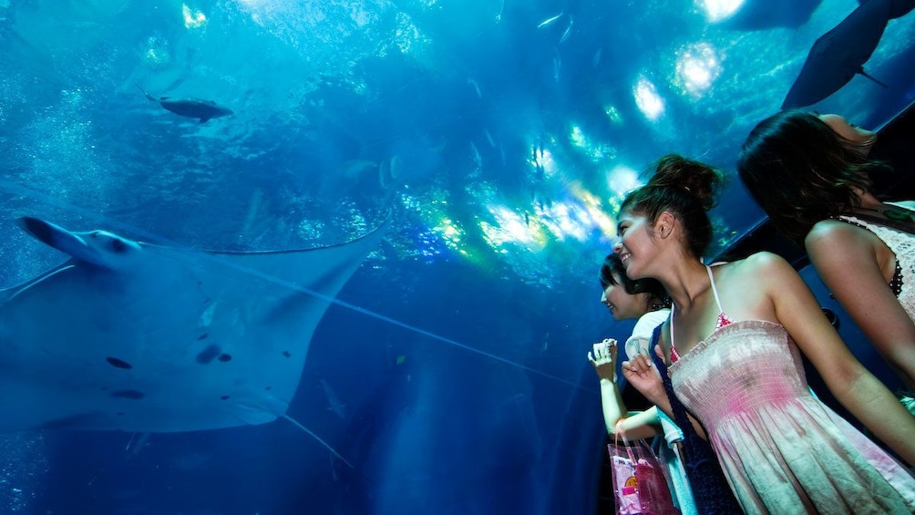 正在顯示第 1 張相片,共 3 張。 Girls watching ray swim by in Okinawa Churaumi Aquarium in Japan
