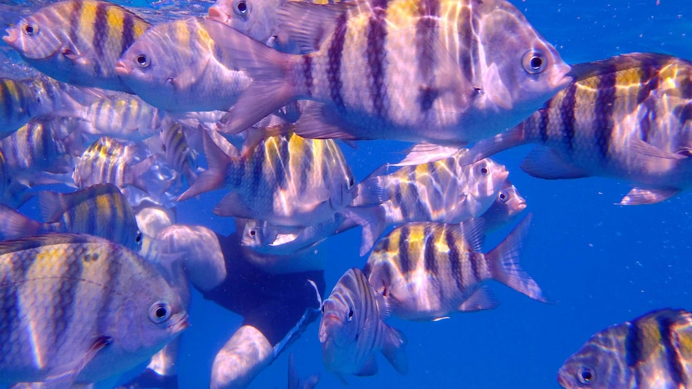 Show item 2 of 7. Fish underwater on the Cruise in Barbados