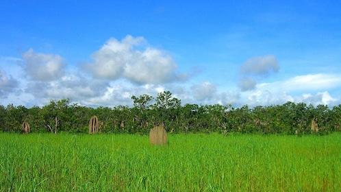 Grasslands in Litchfield National Park