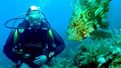 SCUBA diver next to a fish