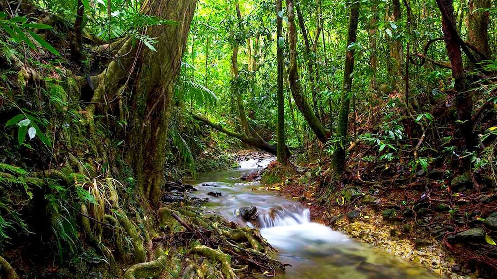 Show item 1 of 5. Small creek travel down forest floor in Daintree Rainforest