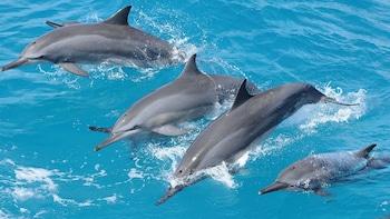 Dolphin-Watching Cruise from Fish Eye Marine Park