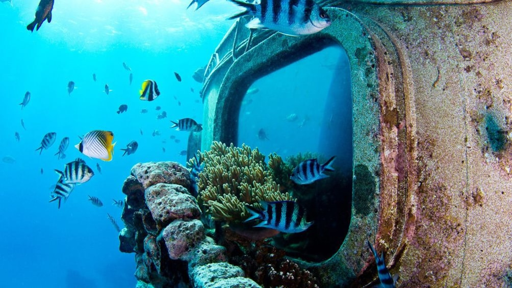 Show item 2 of 4. Coral reef and colorful fish in Guam