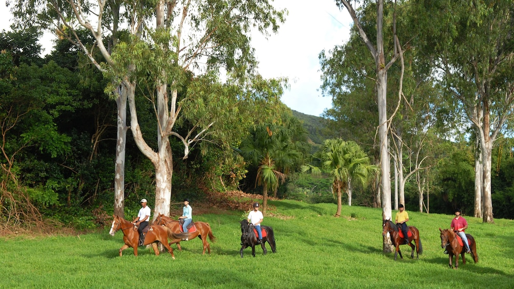 Charger l'élément 3 sur 5. Horse riding tour in Mauritius
