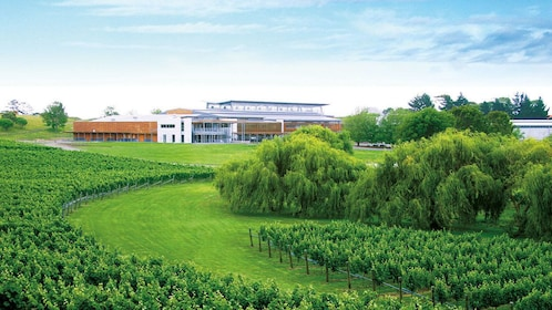 Auckland winery