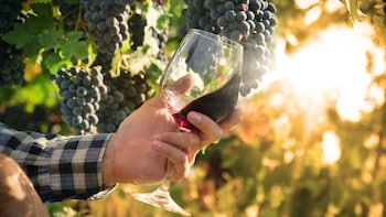 Half Day Discovery Roman Vineyard & Wine Tastings