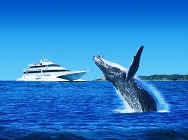 Tangalooma Whale Watching HERO IMAGE.jpg