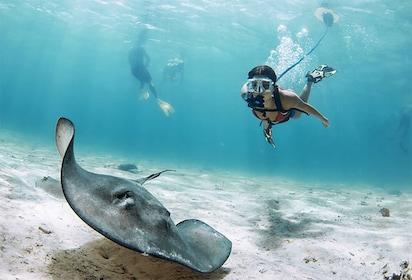hooka-diving-1955x1329.jpg
