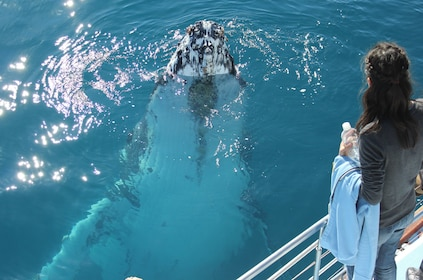 Woman looking at a whale from the deck of a boat near Fraser Island