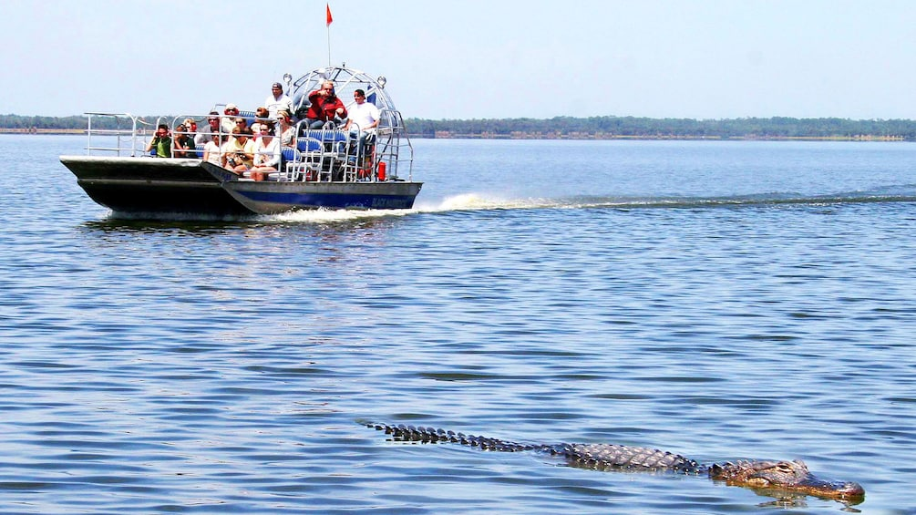 Airboat with crocodile nearby in Florida