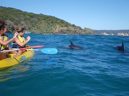 Dolphin View Kayaking + Great Beach Drive Day Adventure