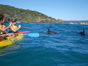 Guests taking photo of dolphins from their kayak in Australia