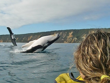 Visitor viewing a whale jump out of the water fro a kayak in Australia