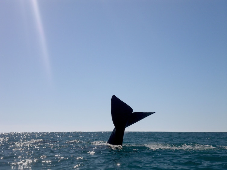 Show item 10 of 10. Whale tail near Double Island