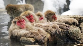 Full-Day Jigokudani Monkey Park, Zenko-ji & Sake Brewery Tour in Nagano