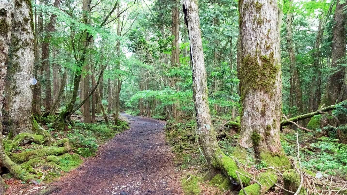 Day view of Aokigahara Forest in Japan