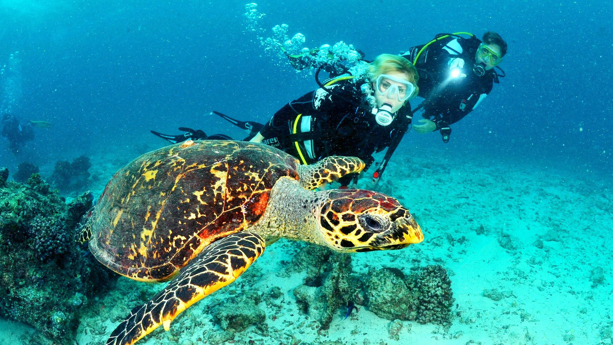 Two scuba divers swim next to sea turtle in Lanzarote