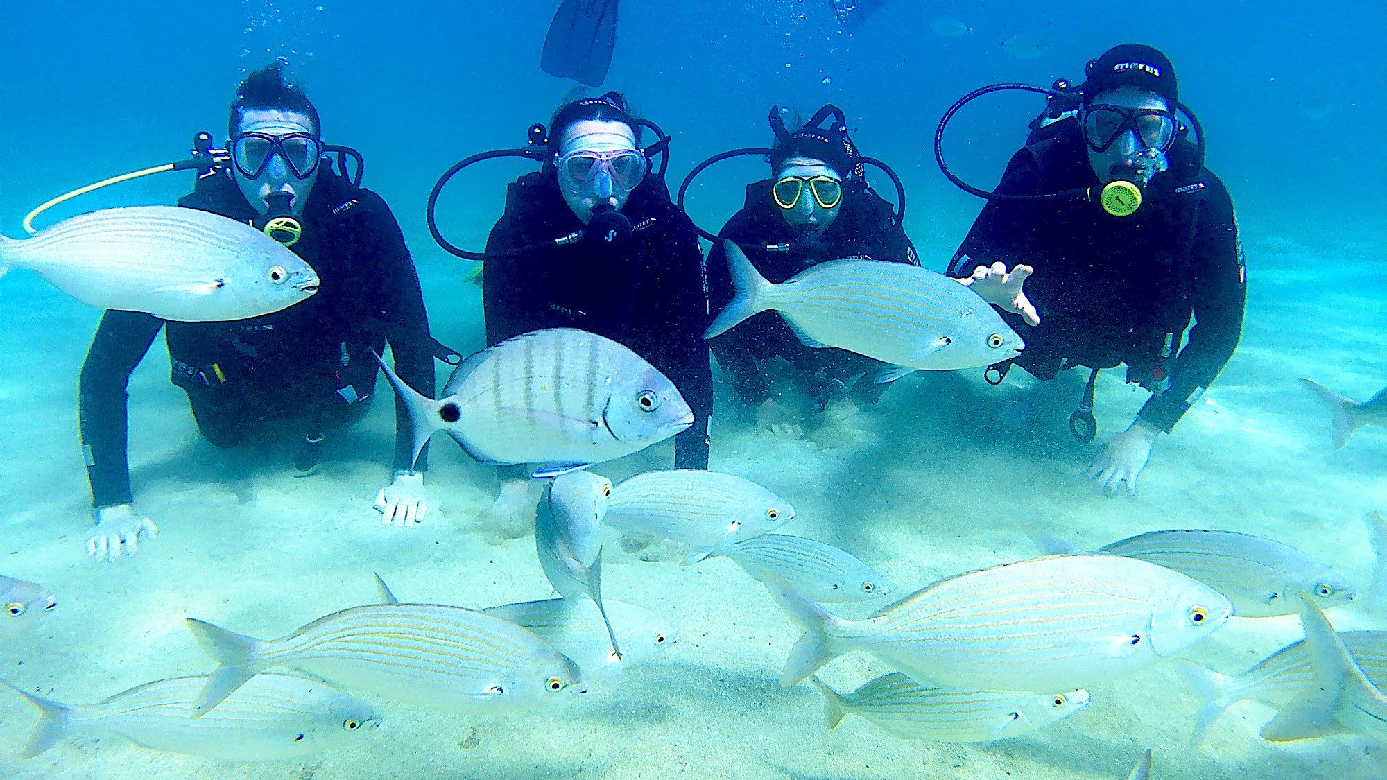 Four scuba divers kneel at bottom with large fish swimming by in Lanzarote