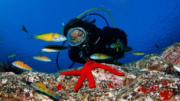 Beginner Scuba Diving Lesson in Caleta de Fuste