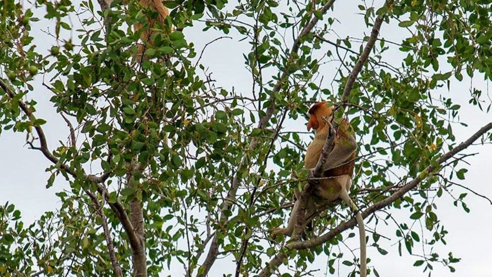 Show item 4 of 5. Monkey in a tree