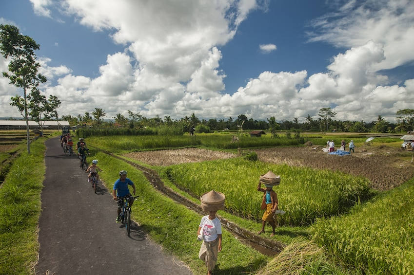 Show item 3 of 10. Cyclists ride past farmers in Bali countryside