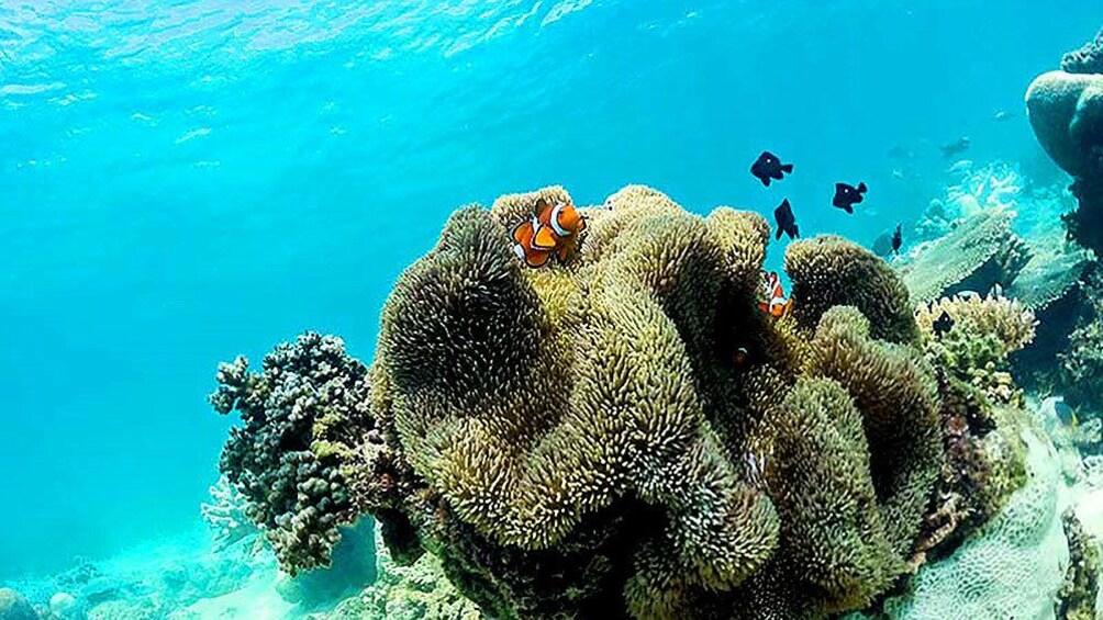 Show item 3 of 10. Fish swimming around coral in Kota Kinabalu