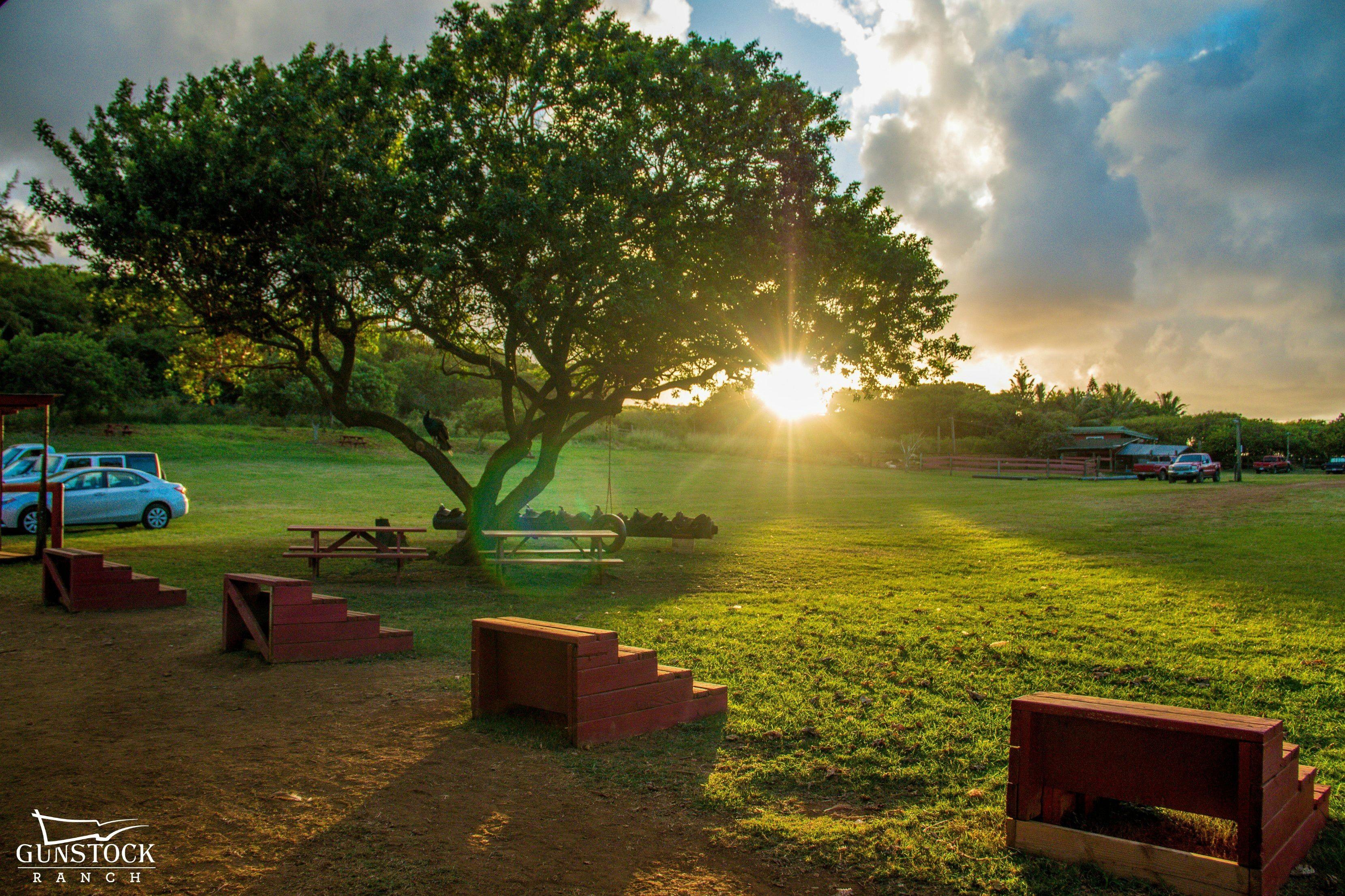 Sun poking through the trees in Gunstock ranch