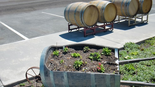 Garden and barrels of wine at a vineyard in Sonoma