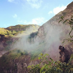 Monkey in the mist of an Australian mountain