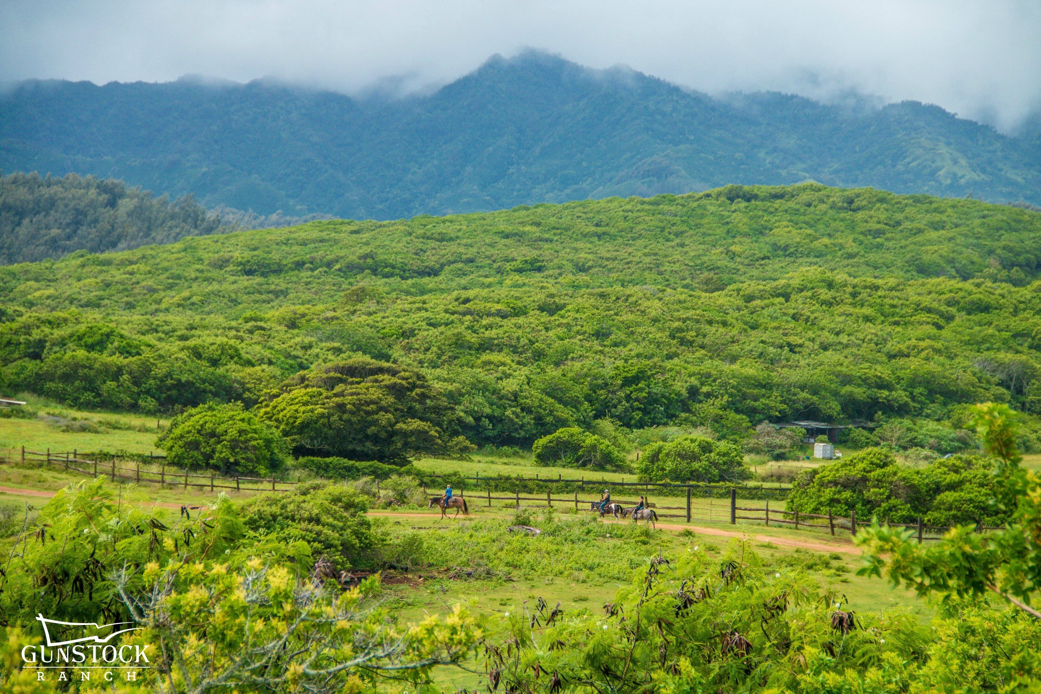 People riding horses with mountains in the distance in Hawaii