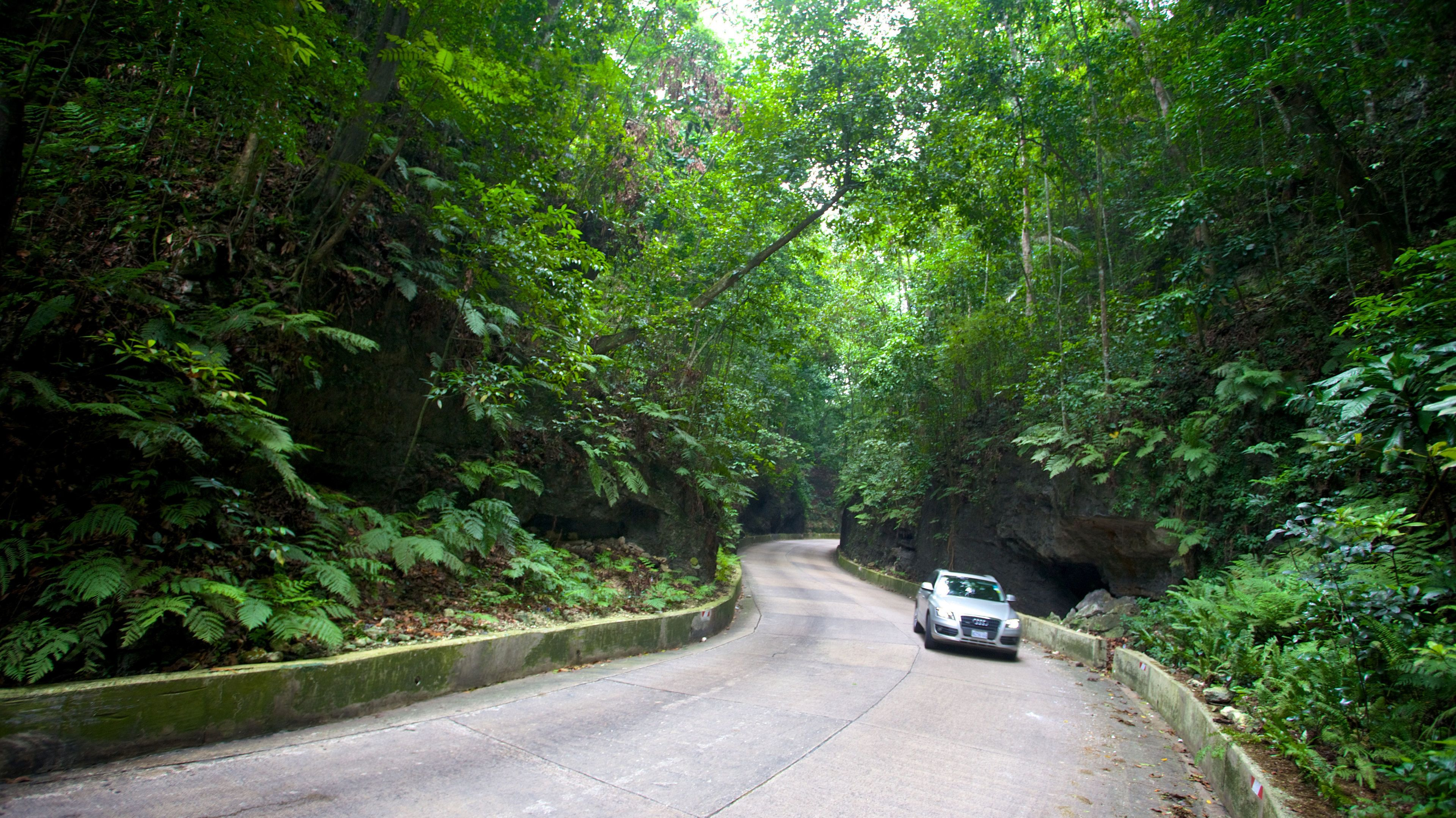 Winding tree-lined road in Fern Gully, Jamaica