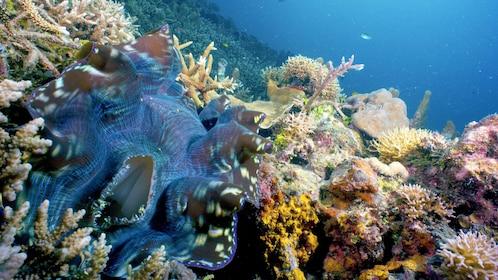 Views on the PADI Scuba Diving in TAR Marine Park from Kota Kinabalu
