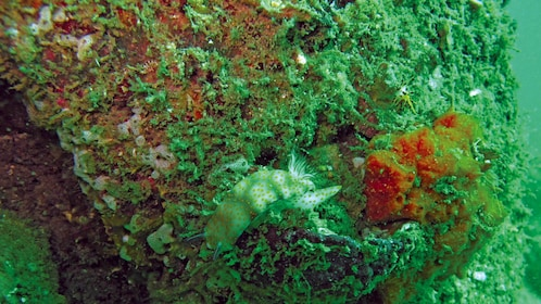 Close up of the coral reef seen on the PADI Scuba Diving in TAR Marine Park from Kota Kinabalu