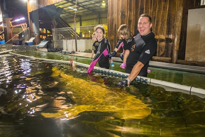 Family touching a shark in a tank in New South Wales