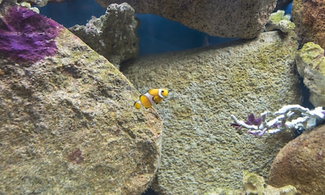 Small fish in aquarium in New South Wales