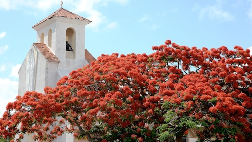 Beautiful red flowers in front of a cathedral on the Guided City Tour Of Noumea