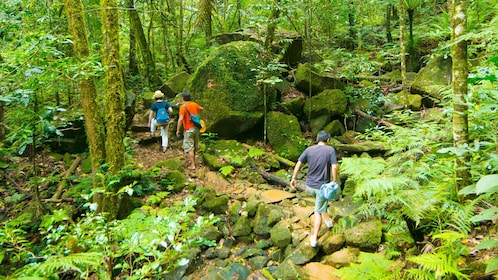 Hiking group in the forest in Noumea