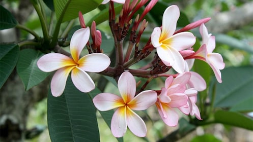 Flowers in New Caledonia