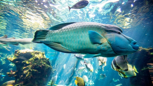 Stunning fish at the Aquarium and Duck Island Tour in New Caledonia