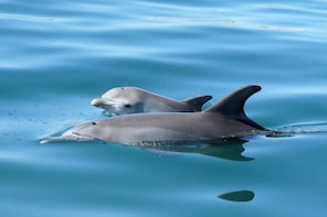 Dolphin Eco Cruise