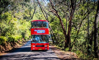 Blue Mountains Hop-on Hop-Off Explorer Pass