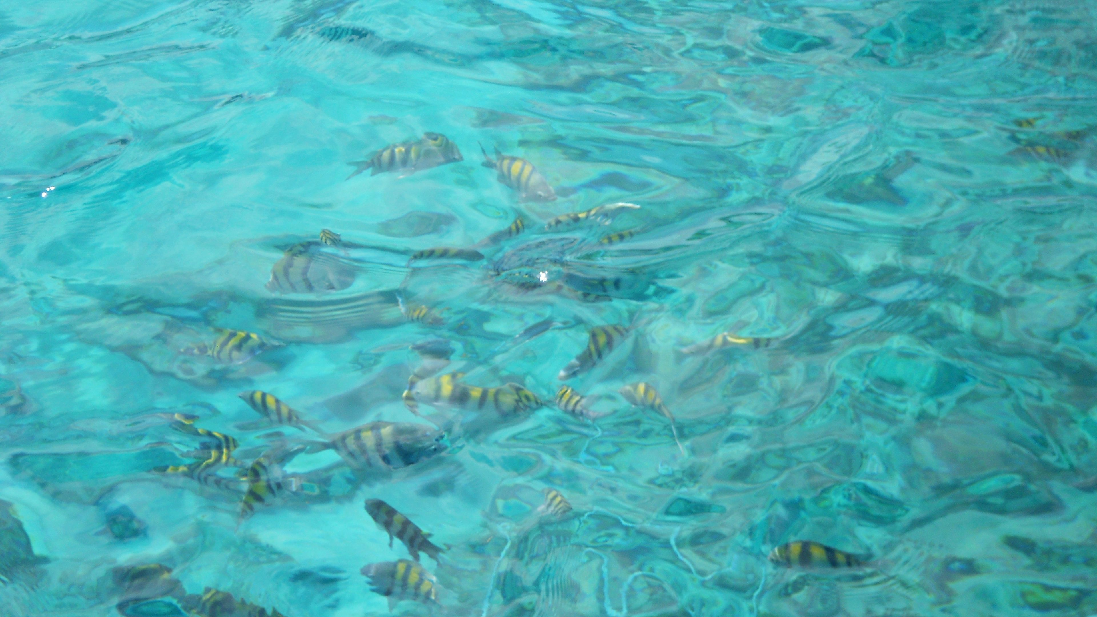 Yellow striped fish visible through clear blue water in Nassau