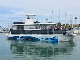 Oceanside Whale and Dolphin Watching Adventures